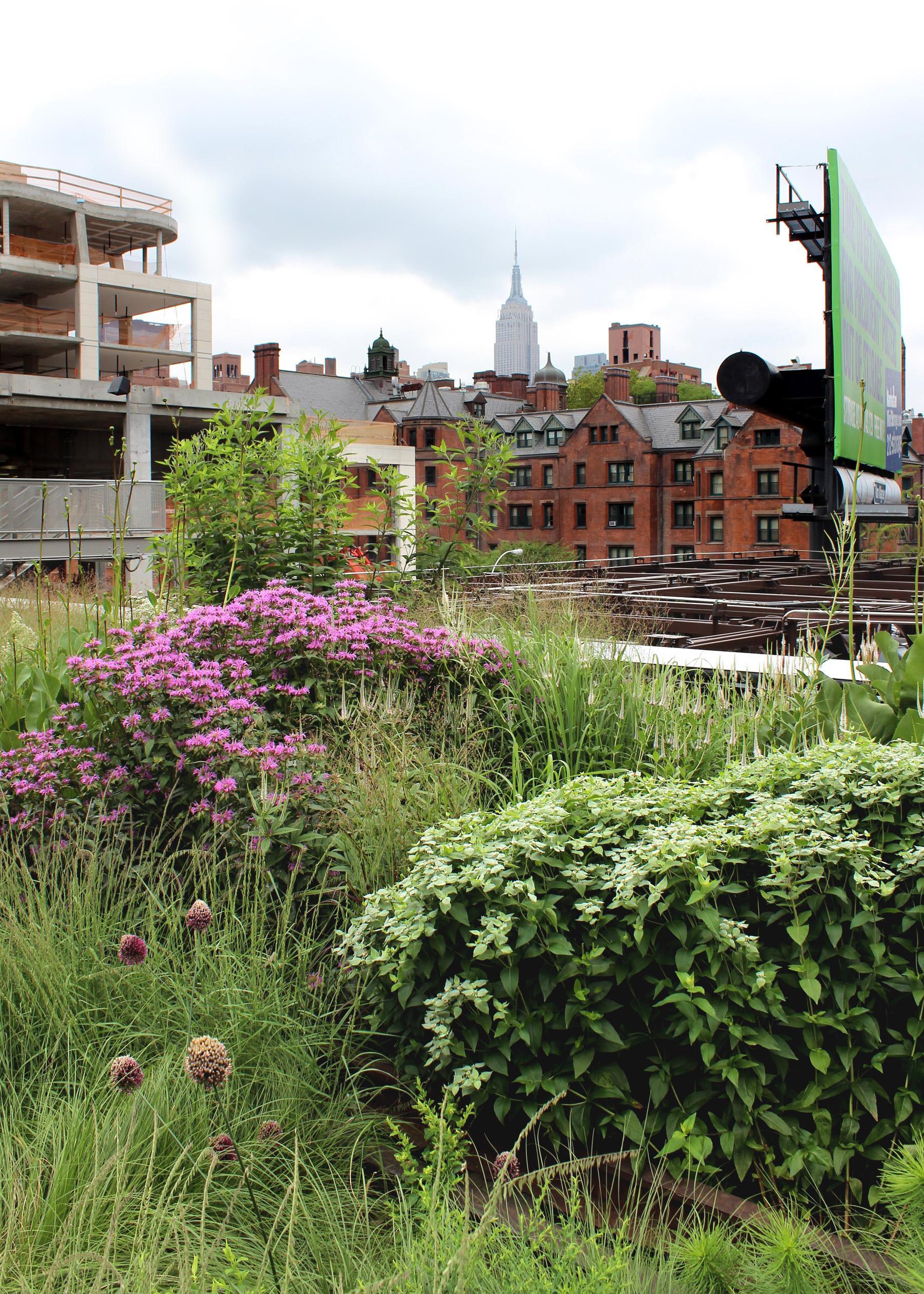 The High Line A Prairie Garden In The Sky