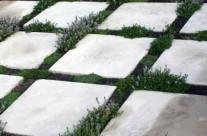 Thyme Plantings