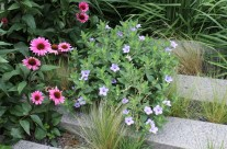 The High Line – A Prairie Garden in the Sky