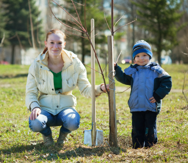 Mother and Son Tree Planting