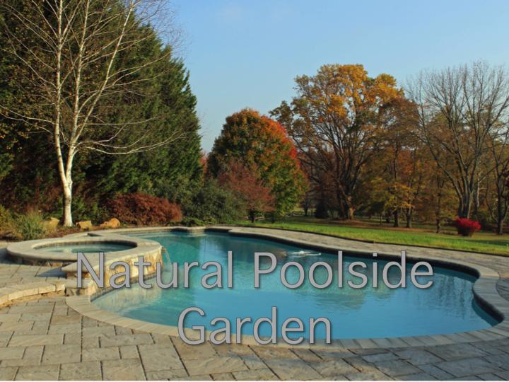 Natural Poolside Garden