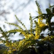 Finding Winter Beauty In Gardens