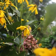 Gardening with Color in the Dog Days of Summer…