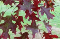 Fall Festival & Plant Sale Oct 12th & 13th at ArborFest