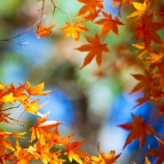 Fall Gardening – It's Not Too Late to Plant Your Garden