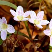 Spring Ephemeral Magic